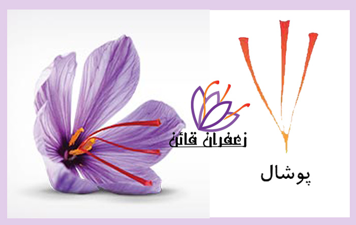 انواع زعفران پوشال  قیمت روز زعفران  انواع زعفران صادراتی